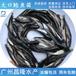 昌隆水产南方大口鲶鱼苗,三明热销大口鲶鱼苗面向全国发货