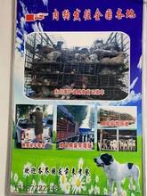玉林供应肉狗养殖批发,肉狗苗图片