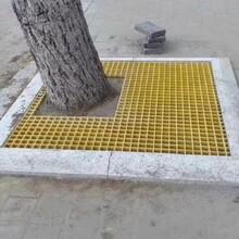 河南訂制建誠玻璃鋼樹池篦子設計合理,樹池格柵圖片