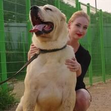 驻马店中亚牧羊犬养狗场图片