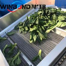 華邦蒸煮漂燙機,上海訂制蔬菜漂燙殺青設備性能可靠圖片