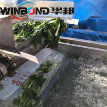 華邦漂燙機,天津熱門蔬菜漂燙殺青設備量大從優圖片
