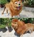 那曲仿真獅子價格