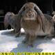 肉兔服務圖