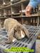 養兔送飼料肉兔耗料低