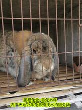 永州养兔送饲料肉兔出栏快图片