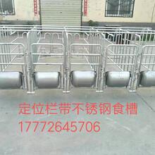 衢州全新母猪定位栏量大从优,复合板母猪定位栏图片