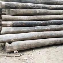 濟寧微山縣老榆木板材圖片