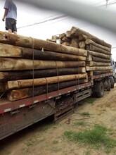 山東加工老榆木梁多少錢一平方圖片