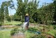 常州天寧區市政綠化養護收費價格標準