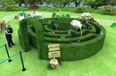 揚州新款綠植迷宮規格齊全圖片