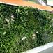 越秀植物墻工程公司