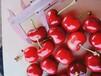 銷售櫻桃樹小苗