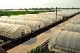 温室大棚建设标准温室的棚建设技术