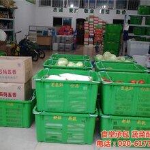 专业蔬菜配送鱼珠街道蔬菜配送康峰餐饮图片