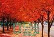 美国红枫树出售_美国红枫树_易合顺物流在线咨询