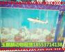 金华鱼缸展览出租价格哪里有鱼缸展租赁的
