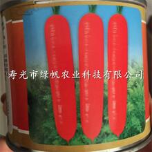 供应高盛F1胡萝卜杂交种早春胡萝卜种子红根胡萝卜种子大田基地用种图片