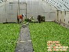 日光温室大棚,建发温室建设,日光温室设备