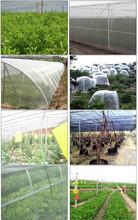 怎样使用防虫网覆盖种植蔬菜图片