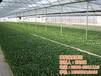 日光温室建设标准图_日光温室设备_建发温室建设