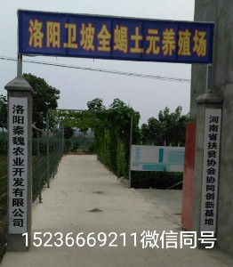 孟津县卫坡全蝎养殖场