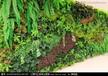 云南仿真植物墙专业设计安装