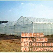 日光温室已认证,温室大棚工程,玻璃温室温室大棚工程