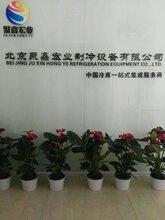 北京牛羊肉冷库报价丨北京牛羊肉冷库排酸丨北京牛羊肉冷库设计安装