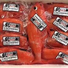 广州喜知次冰鲜金吉鱼批发刺身料理食材图片
