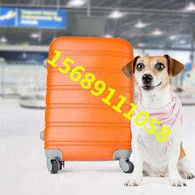 青岛宠物托运多少钱航空托运机场空运图片