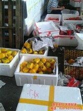 蘿崗區蔬菜配送基地永和街道蔬菜配送康峰配送服務圖片