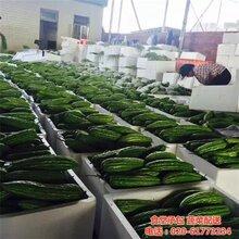 中新鎮蔬菜配送康峰配送公司黃浦區幼兒園蔬菜配送圖片