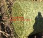 通化縣蒙拓圓捆機專用捆草網PE捆扎網秸稈捆扎繩廠家直銷