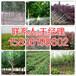 邢台市周边地区桃树苗基地158-3619-8602