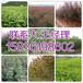 渭南市哪里买6公分国槐育苗基地158-3619-8602