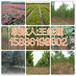 孟州市附近地区4公分核桃树育苗基地158-3619-8602