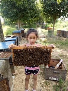 怀化芷江县亿香蜜蜂养殖农民专业合作社