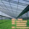 临沂智能温室_朋霸温室工程_智能温室设计
