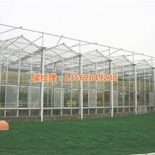 联栋温室石嘴山温室花卉温室大棚