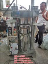 小型香油机液压香油机CCTV栏目上榜图电动香油机图片