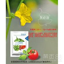 茄子灰霉病草莓灰霉病番茄灰霉病,植物源杀菌剂防治灰霉病特效药丁子香酚
