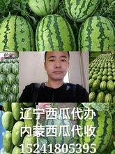 辽宁省西瓜代办代收\内蒙古西瓜代收价格图片