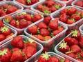 美国草莓图片
