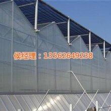 阿里温室_阳光温室工程_阳光板温室工程