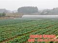 菜市场粮油配送中心夏港街道粮油配送中心康峰餐饮图片