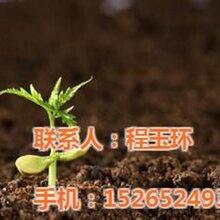 青岛第三方检测厂家图青岛第三方检测专业青岛第三方检测