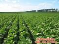 有机蔬菜配送_康峰准时送货_有机蔬菜配送价格图片
