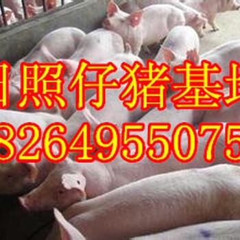 山东日照仔猪价格莒县三元仔猪基地山东三元仔猪交易市场