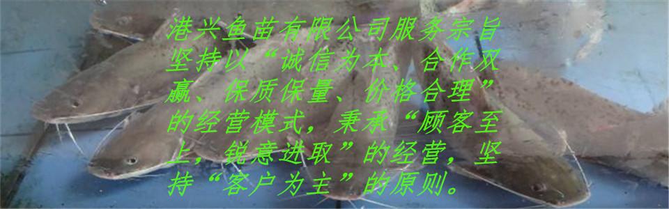 大阳城网投26138k.com